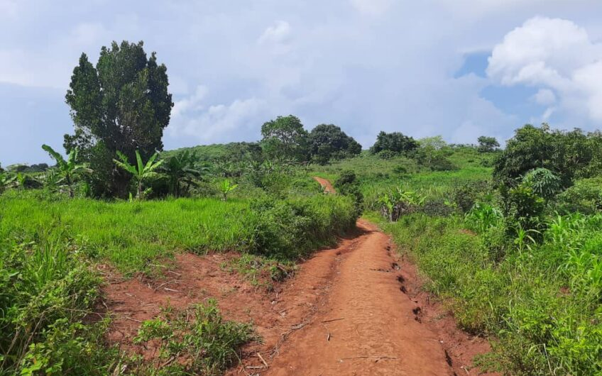 20 ACRES FOR SALE AGRICULTURAL LAND IN BUIKWE (KIYINDI) PRIVATE MAILO TITLE