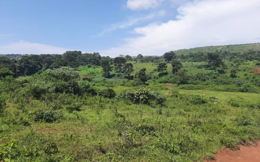 16 ACRES OF FARMLAND IN BUIKWE (NYENGA) PRIVATE MAILO TITLE.