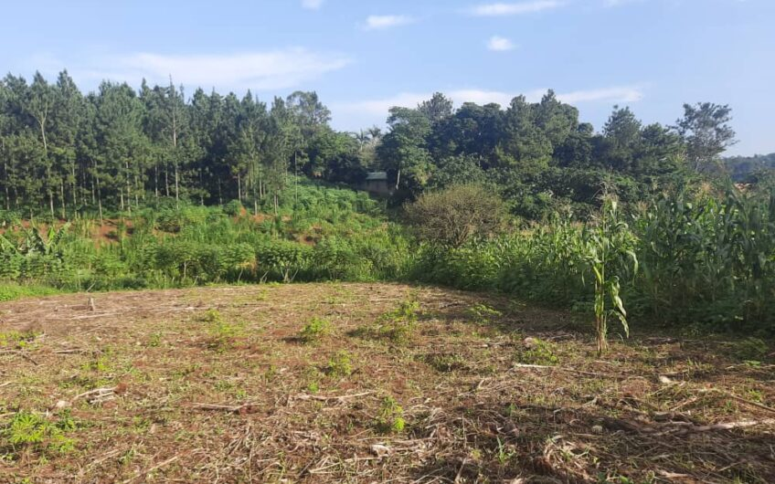 2 ACRES WITH A VIEW OF THE RIVER FOR SALE IN BUWENDA.